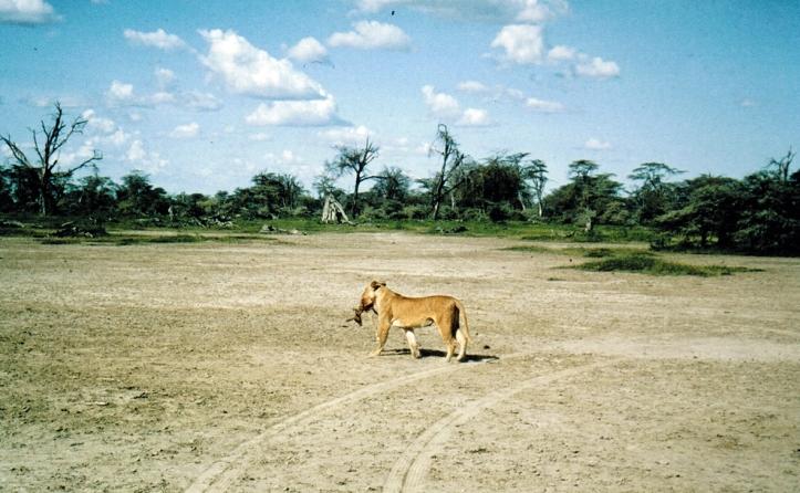 kenya safari 83